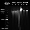 Mu-DNA: a modular universal DNA extraction ...