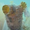 Optimising the detection of marine taxonomic ...