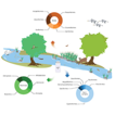 Beyond fish eDNA metabarcoding: Field ...
